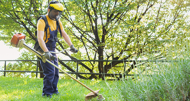 When to Call the Professional Lawn Maintenance Company?