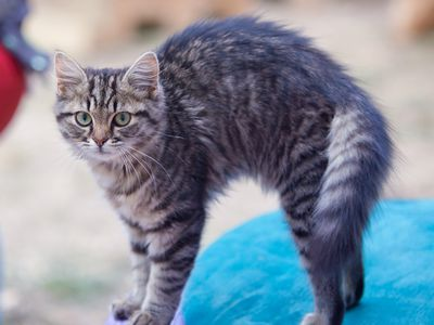 Best anxiety medication for cats